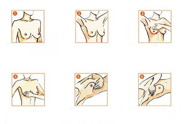 Схема проведения самообследования груди