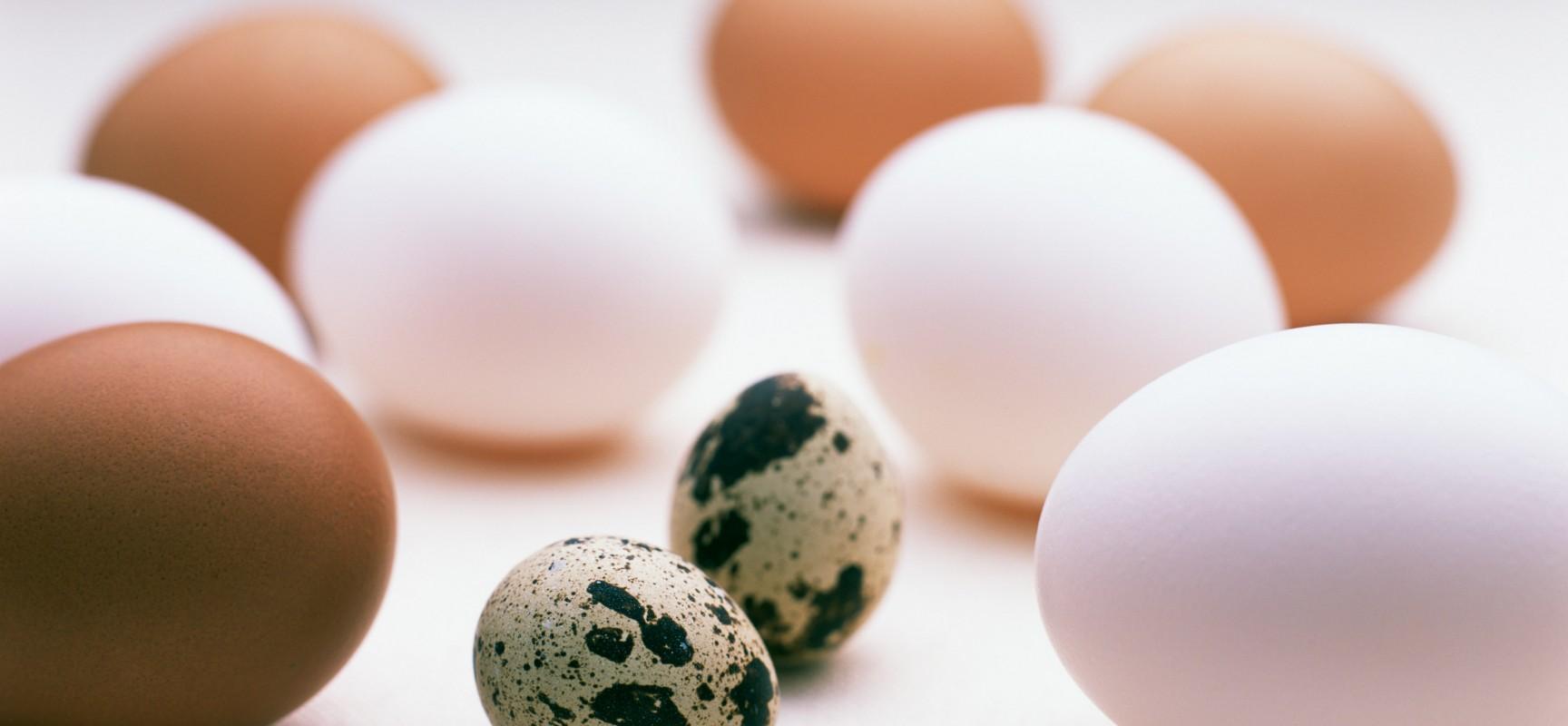 Яйца в рационе кормящей мамы: когда, какие и сколько