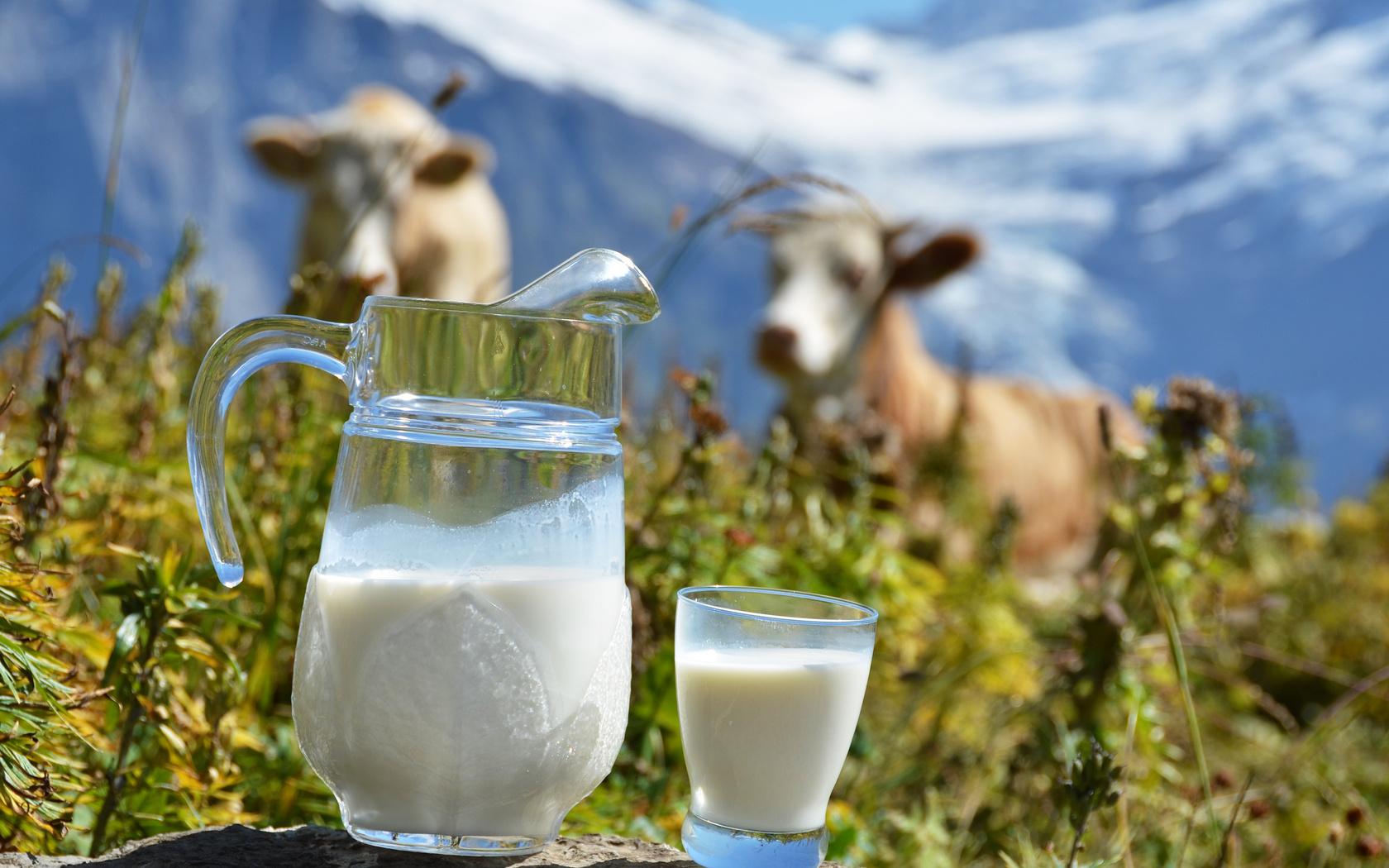 Молоко в рационе кормящей мамы