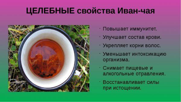 Целебные свойства иван-чая
