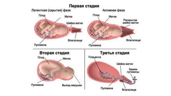 3 периода родов
