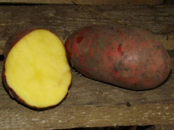 Клубни картофеля жёлтого оттенка