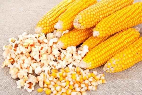 Кукуруза и попкорн из неё