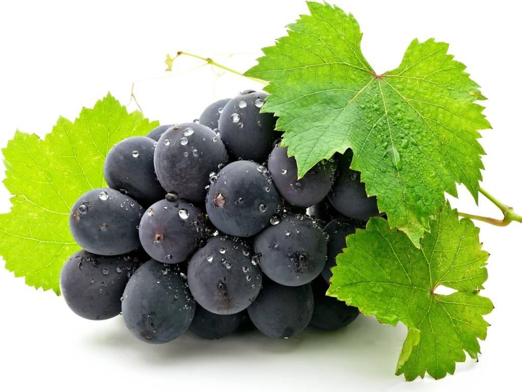 Виноград в рационе кормящей мамы: польза и вред