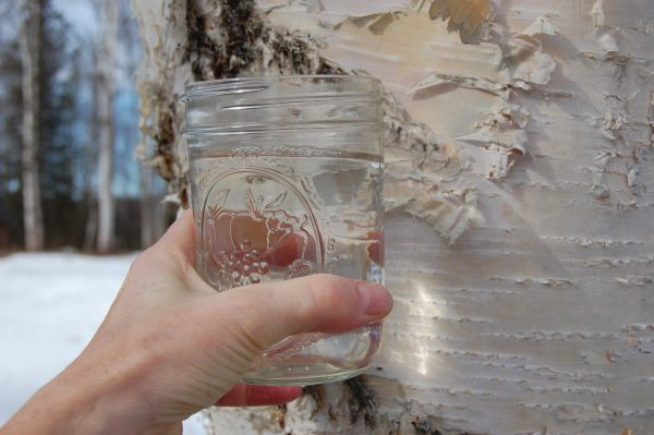 Берёзовый сок в стакане