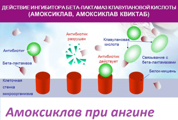 Действие клавулановой кислоты