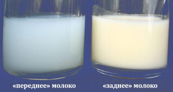 Переднее и заднее грудное молоко в стаканах