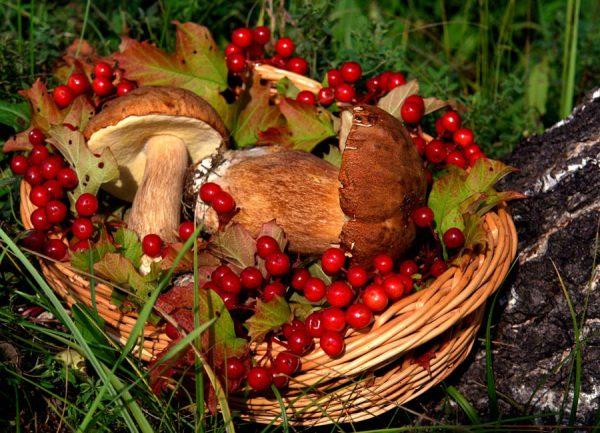 грибы в лукошке