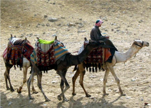 мусульманин на верблюде