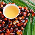 Масло пальмовое